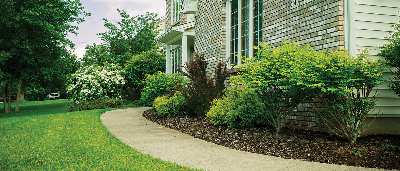 Regan Landscape Yard Maintenance